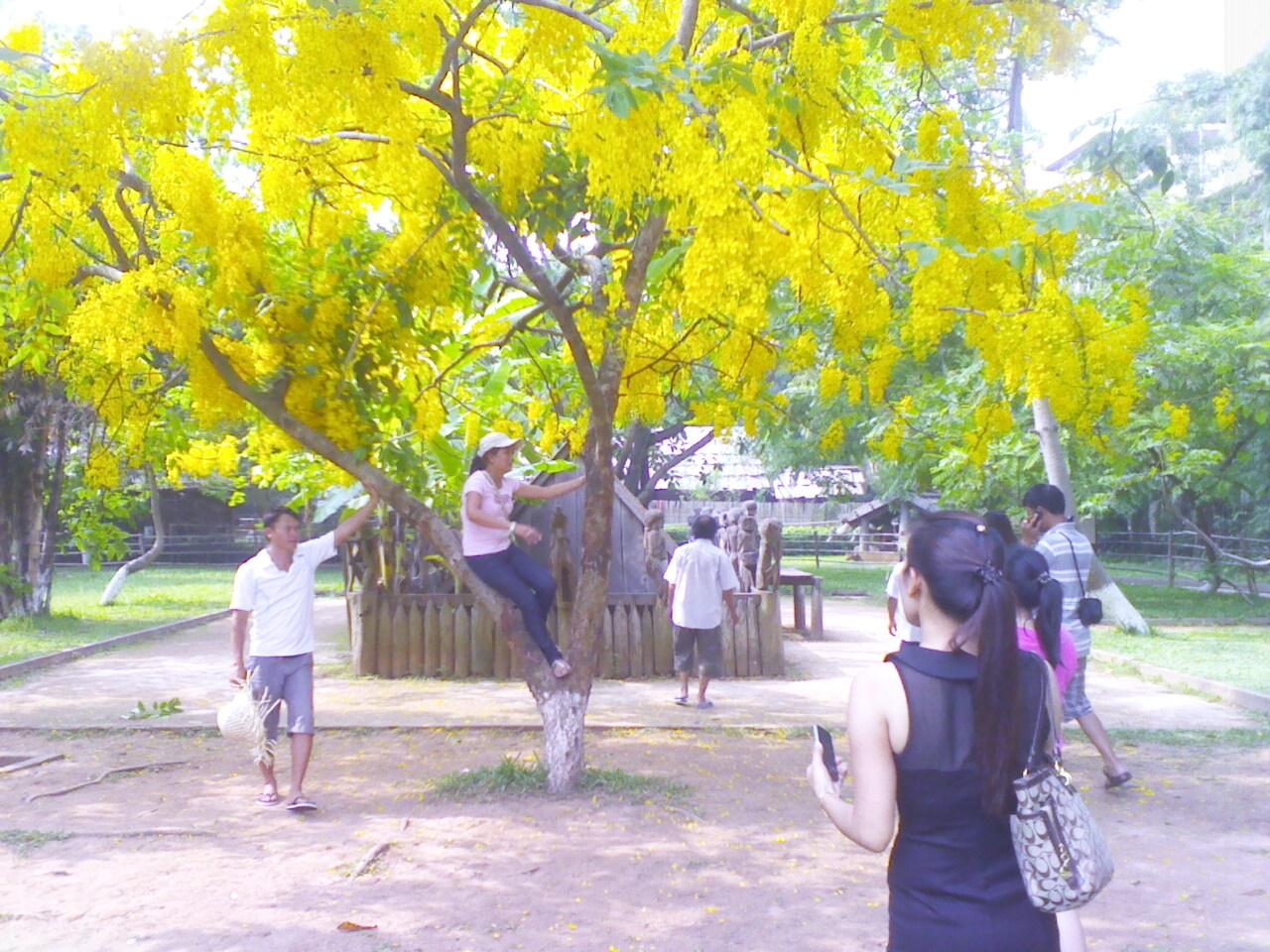 Chụp ảnh, gọi điện và xem chơi nhà mồ Tây Nguyên cạnh bóng cây muồng hoàng yến