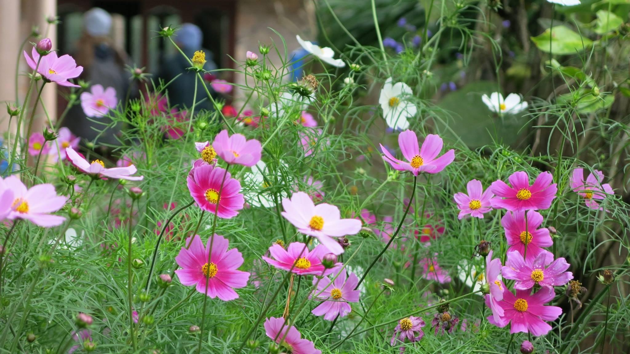 Yêu thương nở tại vườn tâm...